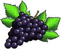 Dark Grapes Stock Photography