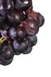 Dark grapes over white Stock Image