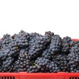 Dark grapes Stock Photos