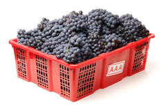 Dark grapes Stock Image