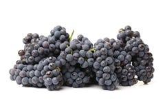Dark grapes Royalty Free Stock Images