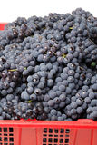 Dark grapes Royalty Free Stock Photography