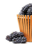 Dark grapes Stock Photography