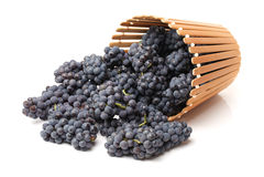 Dark grapes Royalty Free Stock Photos