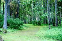 Dark gravel pathway road in evening forest. With low light effect in green summer Stock Photography