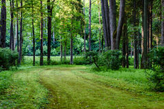 Dark gravel pathway road in evening forest. With low light effect in green summer Royalty Free Stock Image