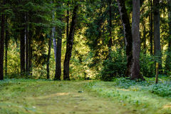Dark gravel pathway road in evening forest. With low light effect in green summer Stock Image