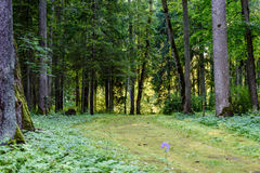 Dark gravel pathway road in evening forest. With low light effect in green summer Stock Photo