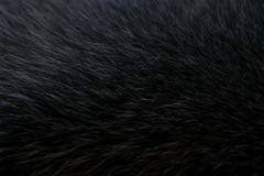 Dark gray fur Stock Photos