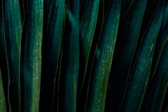 A dark green background made of big leaf Stock Images