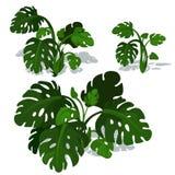 Dark green bushes of fern on white background Stock Images