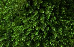 Dark Green Color of Abstract Leaves Background Stock Photos