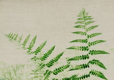 Dark green fern on light grey texture. For a natural and smooth background Stock Images