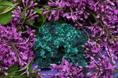 Dark green fibrous Malachite cluster from Shaba Province, Zaire, surrounded by purple lilac flower. Dark green fibrous Malachite cluster from Shaba Province royalty free stock images