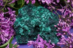 Dark green fibrous Malachite cluster from Shaba Province, Zaire, surrounded by purple lilac flower. Dark green fibrous Malachite cluster from Shaba Province stock photo