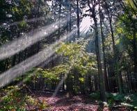 Dark green forest Stock Photos