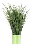 Dark green forest herbs Royalty Free Stock Photos