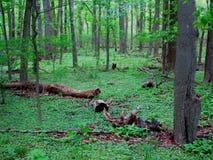 Dark Green Forest Stock Photo