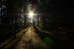 Dark green forest with a path between trees at sunrise. Royalty Free Stock Photography