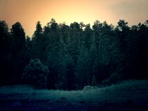 Dark Green Forest at Sunset Stock Photography