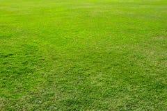 Free Dark Green Garden Lawn Royalty Free Stock Photos - 139252338