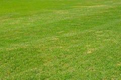 Dark green garden Lawn stock images