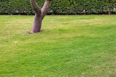 Dark green garden Lawn royalty free stock image