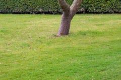 Dark green garden Lawn stock photos