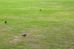Dark green garden Lawn royalty free stock images