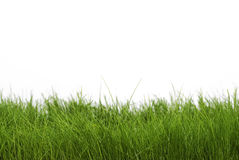 Dark green grass. Isolated over white Royalty Free Stock Image
