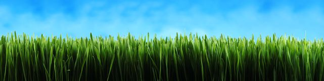 Dark green grass panorama background Stock Images
