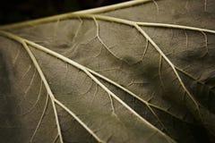 Dark green leaf texture background Stock Photo
