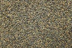Dark green lentils background Stock Images