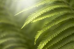Dark green mysterious spring natural background with white fern leaves, outdoor nature, soft focus, partially blurred image stock photography