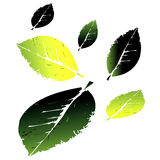 Dark green and yellow colorful leaves icons Stock Photos