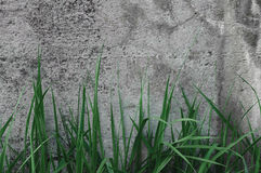 Dark Grey Coarse Concrete Stone Wall Texture, Green Grass, Horizontal Macro Closeup Old Aged Weathered Detailed Natural Gray Stock Photography