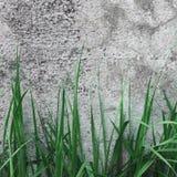 Dark Grey Coarse Concrete Stone Wall Texture, Green Grass, Horizontal Macro Closeup Old Aged Weathered Detailed Natural Gray Royalty Free Stock Photo