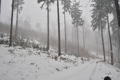 Blizzard in the forest. Dark grey forest during blizzard, heavy snow Royalty Free Stock Photography