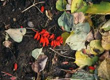 Dark ground with leaves and flowers stock images