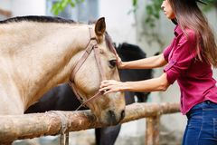 The dark-haired girl is stroking the horse. Outdoors. Dark-haired young girl stroking a beautiful brown horse. Outdoors Stock Image