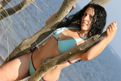 Dark Haired Woman in Bikini. Dark haired woman in a blue bikini leaning against trees with ocean in background Stock Photo