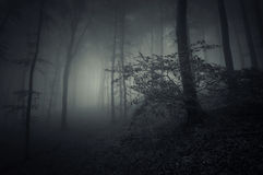 Dark Halloween scene in forest Stock Images