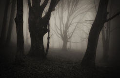 Dark Halloween scene in forest with mysterious fog Stock Images