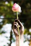 Dark hand holding a lotus. Royalty Free Stock Image