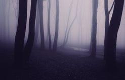 Dark haunted forest Stock Photos