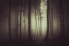 Dark haunted forest Royalty Free Stock Photos