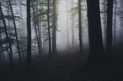 Dark haunted forest with fog at night Royalty Free Stock Photo