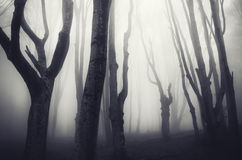 Dark haunted forest on Halloween. Mysterious dark haunted forest with fog and spooky trees on Halloween stock image