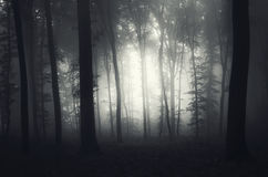 Dark haunted forest with mysterious fog Royalty Free Stock Photo