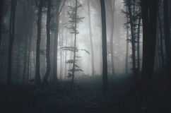 Dark haunted Halloween forest with mysterious fog Royalty Free Stock Photo